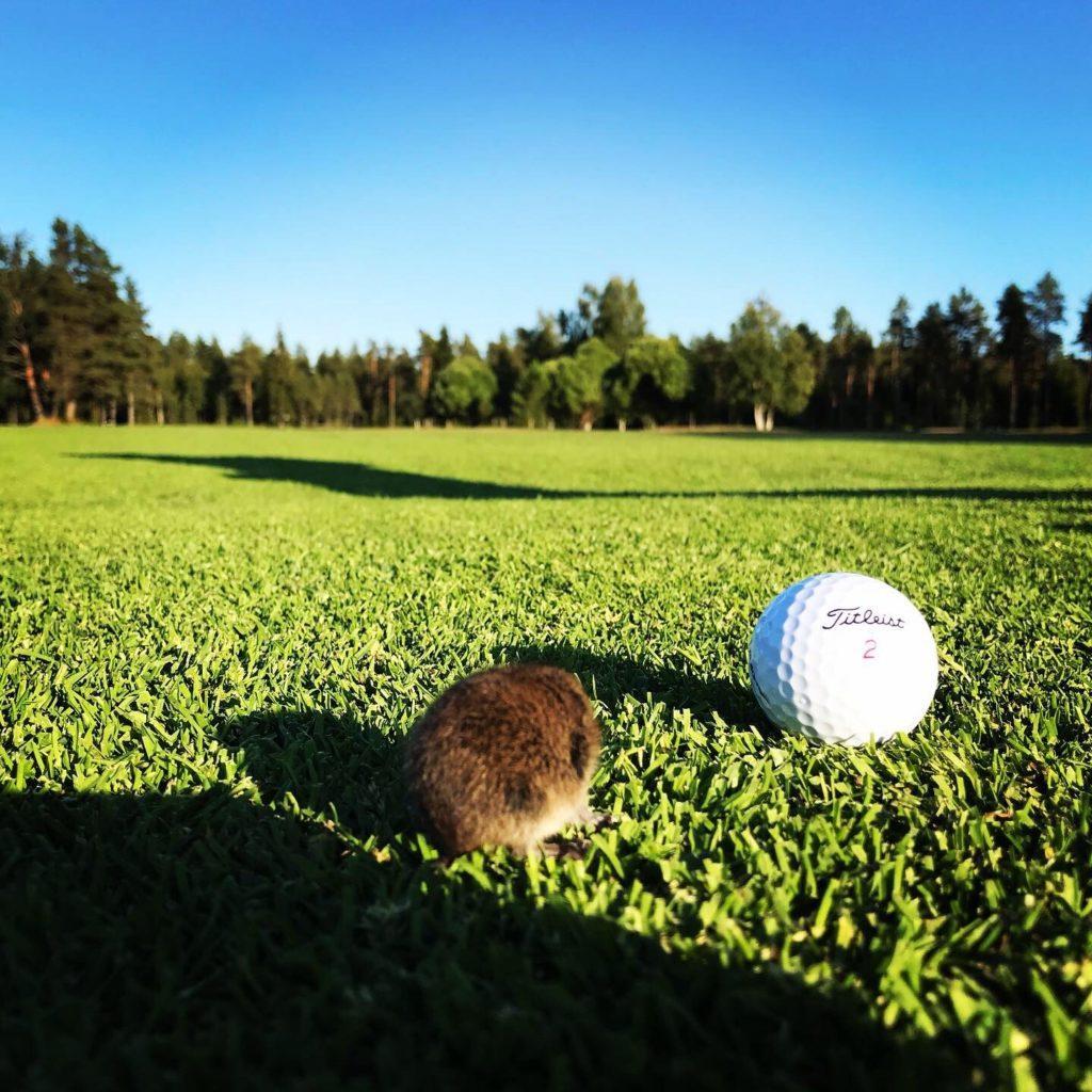 KoG golfhiiri